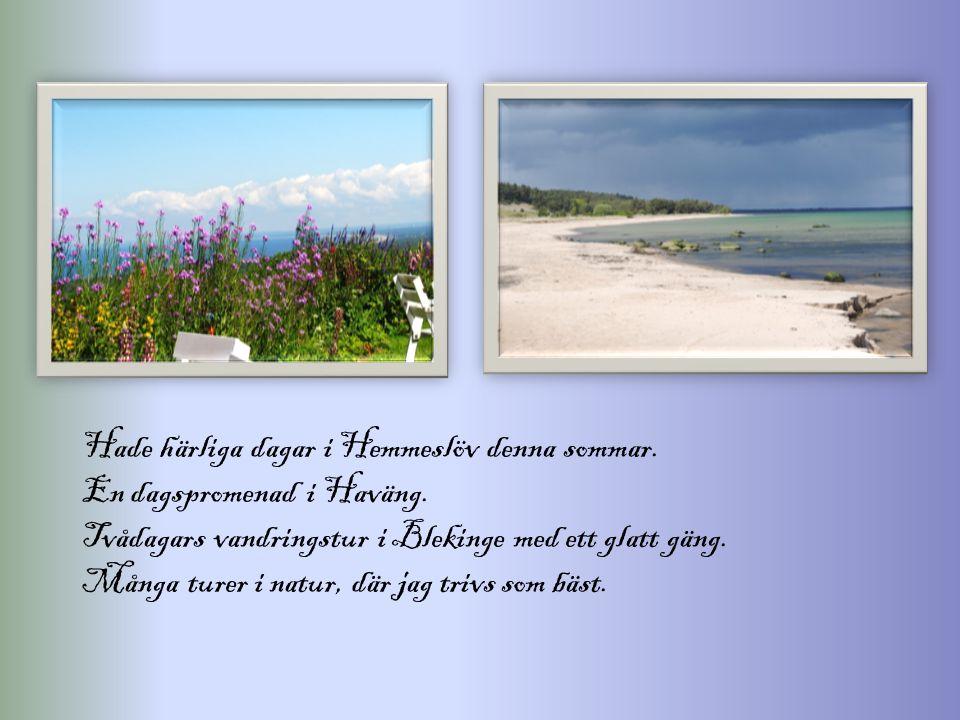Hade härliga dagar i Hemmeslöv denna sommar. En dagspromenad i Haväng. Tvådagars vandringstur i Blekinge med ett glatt gäng. Många turer i natur, där