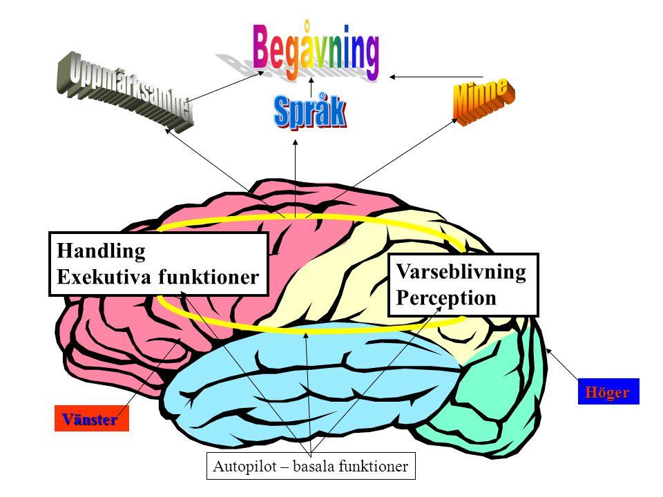 Handling Exekutiva funktioner Varseblivning Perception Autopilot – basala funktioner Vänster Höger