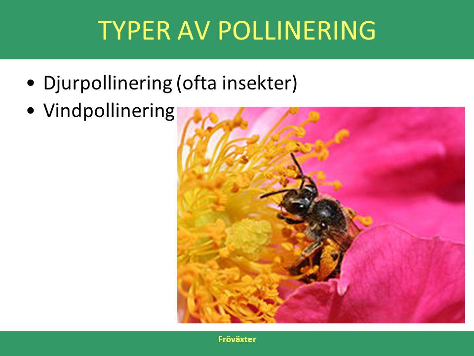 Fröväxter TYPER AV POLLINERING •Djurpollinering (ofta insekter) •Vindpollinering