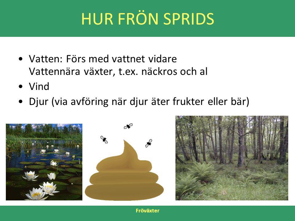 Fröväxter HUR FRÖN SPRIDS •Vatten: Förs med vattnet vidare Vattennära växter, t.ex. näckros och al •Vind •Djur (via avföring när djur äter frukter ell