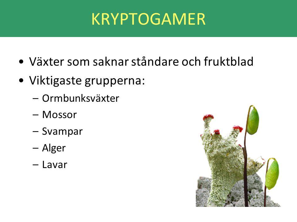 KRYPTOGAMER •Växter som saknar ståndare och fruktblad •Viktigaste grupperna: –Ormbunksväxter –Mossor –Svampar –Alger –Lavar
