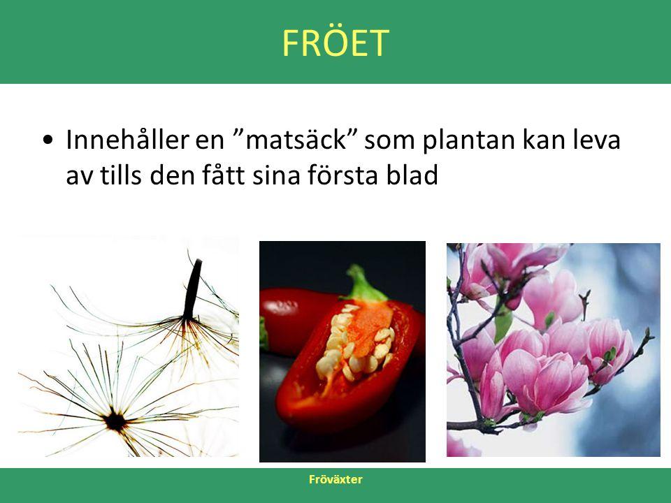 """Fröväxter FRÖET •Innehåller en """"matsäck"""" som plantan kan leva av tills den fått sina första blad"""
