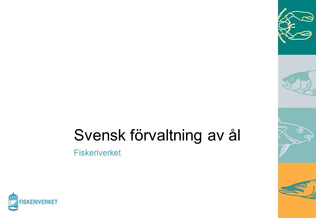 Svensk förvaltning av ål Fiskeriverket