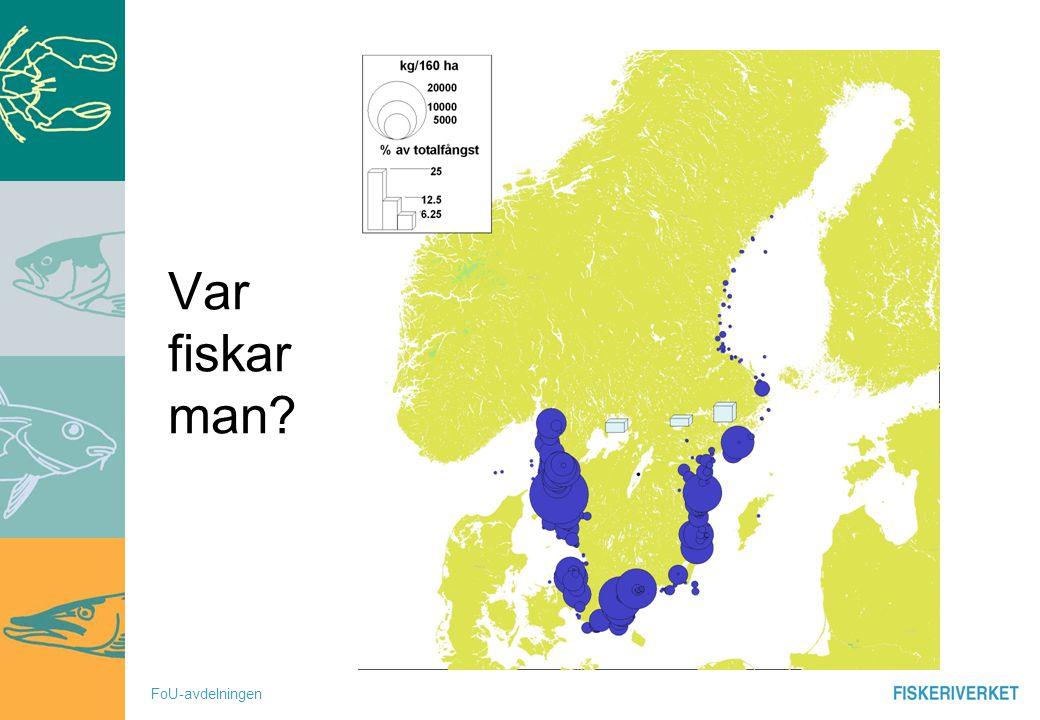 FoU-avdelningen Var fiskar man?