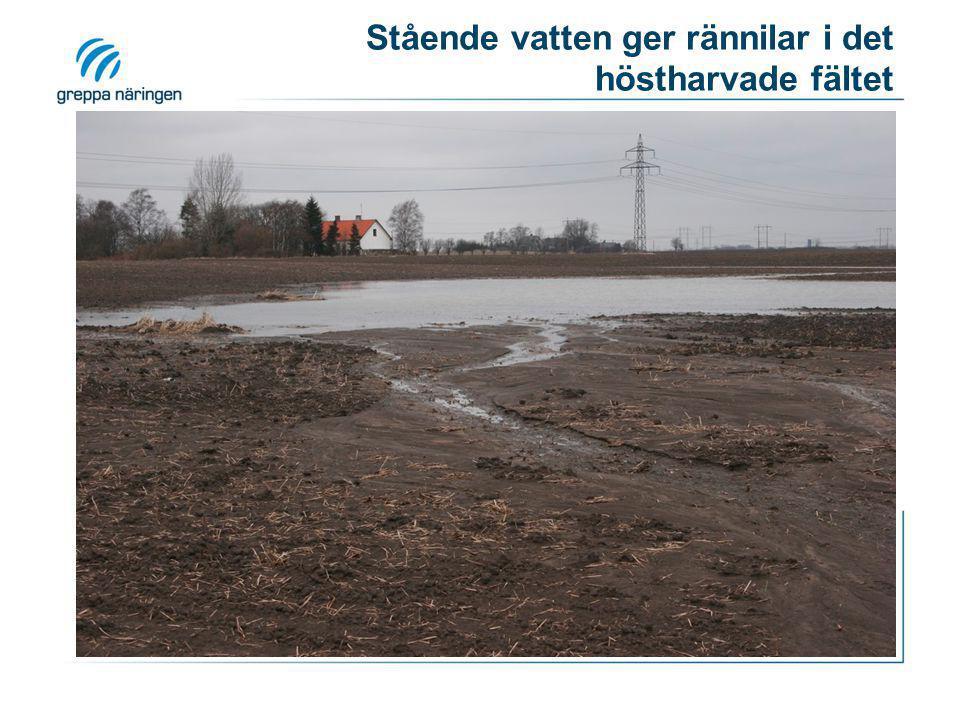 Stående vatten ger rännilar i det höstharvade fältet