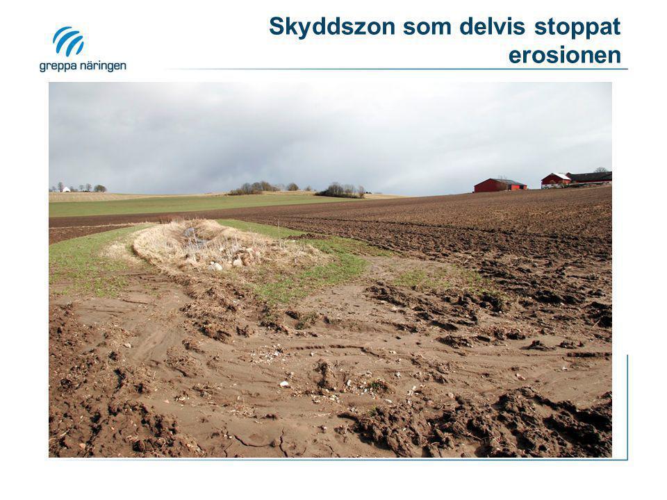 Skyddszon som delvis stoppat erosionen