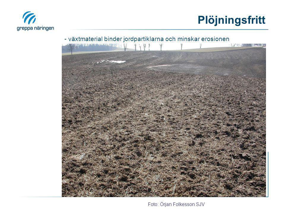 Plöjningsfritt Foto: Örjan Folkesson SJV - växtmaterial binder jordpartiklarna och minskar erosionen