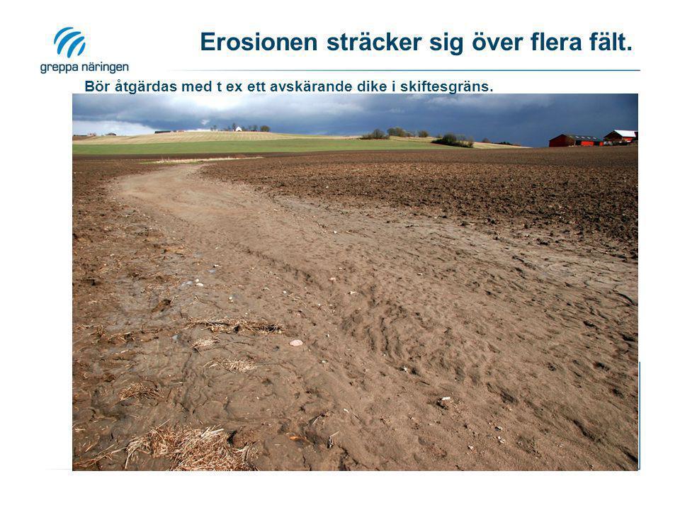 Erosionen sträcker sig över flera fält. Bör åtgärdas med t ex ett avskärande dike i skiftesgräns.