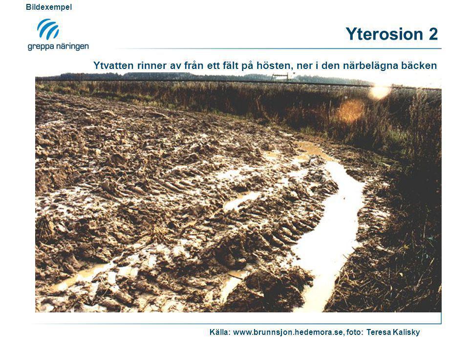 Ytvatten rinner av från ett fält på hösten, ner i den närbelägna bäcken Källa: www.brunnsjon.hedemora.se, foto: Teresa Kalisky Bildexempel Yterosion 2