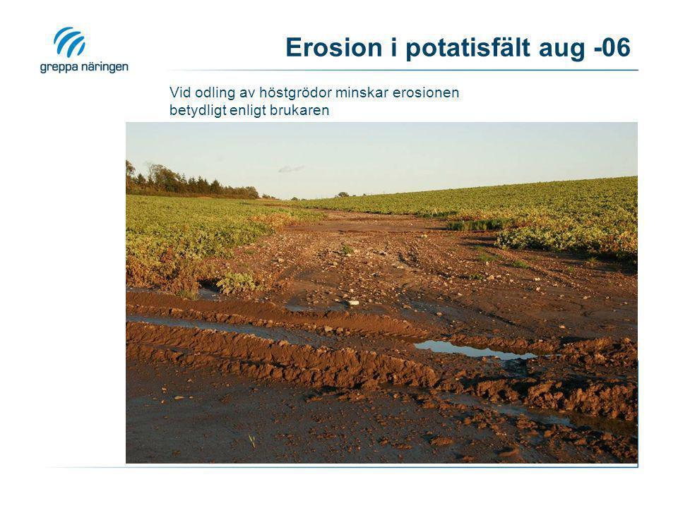 Dåligt rensad brunn klarar inte allt vatten vid kraftig avrinning