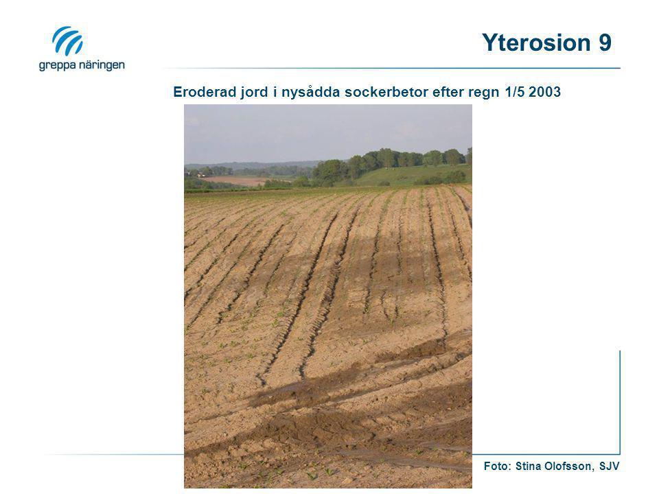 Eroderad jord i nysådda sockerbetor efter regn 1/5 2003 Foto: Stina Olofsson, SJV Yterosion 9