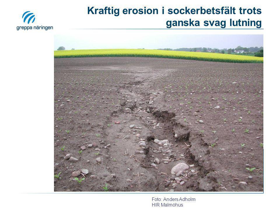 Erosion i höstvete april -06 Erosionen har börjat på grannens fält och fortsätter ned mot ett vattendrag