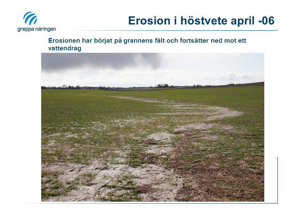 Eroderad jord i uppkommen gröda Foto: Stina Olofsson, SJV Yterosion 7