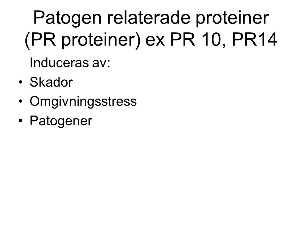 Patogen relaterade proteiner (PR proteiner) ex PR 10, PR14 Induceras av: •Skador •Omgivningsstress •Patogener