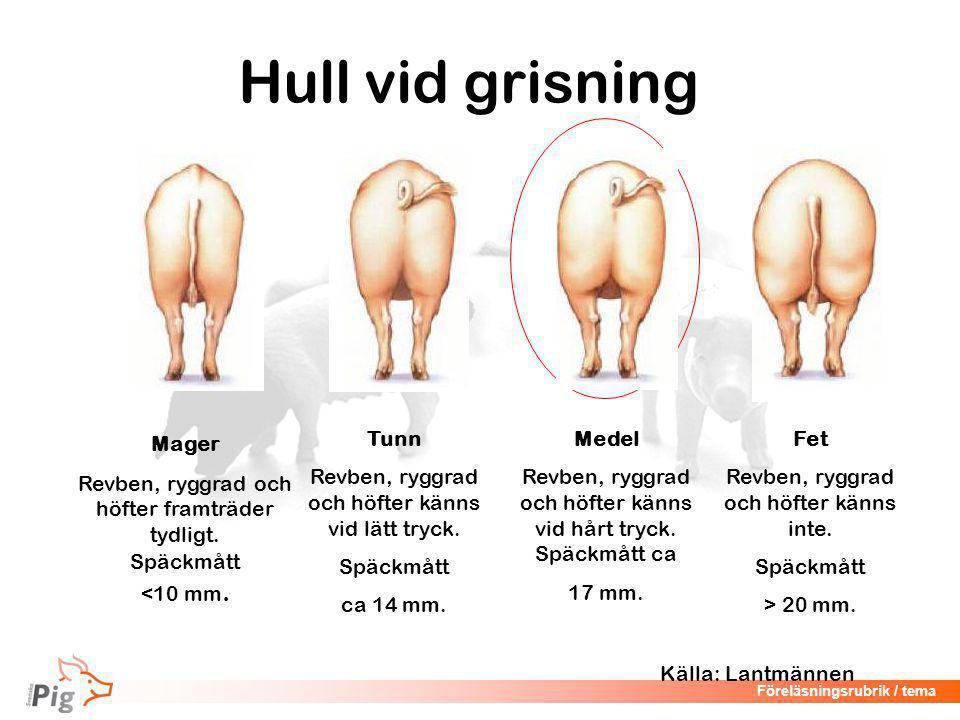 Föreläsningsrubrik / tema Hull vid grisning Mager Revben, ryggrad och höfter framträder tydligt.