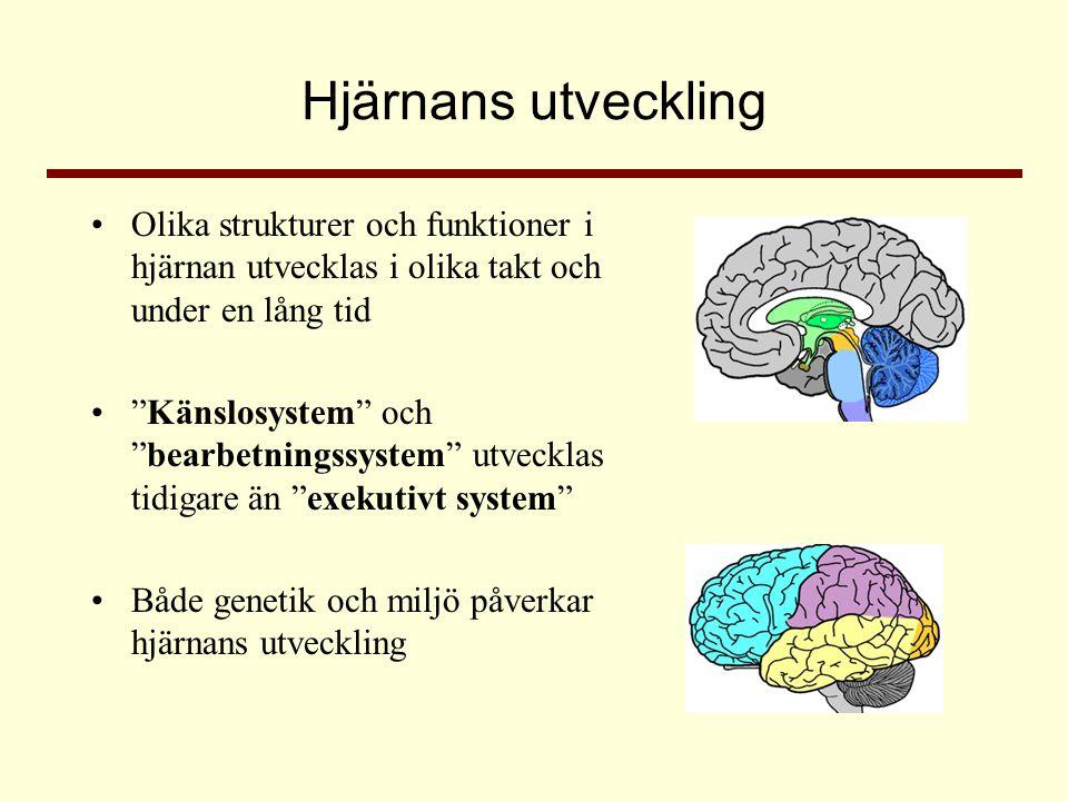 """Hjärnans utveckling •Olika strukturer och funktioner i hjärnan utvecklas i olika takt och under en lång tid •""""Känslosystem"""" och """"bearbetningssystem"""" u"""