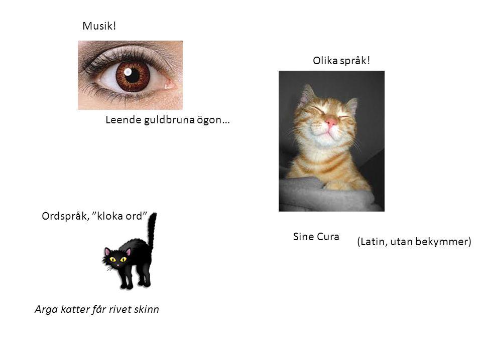 "Arga katter får rivet skinn Leende guldbruna ögon… Sine Cura (Latin, utan bekymmer) Musik! Olika språk! Ordspråk, ""kloka ord"""