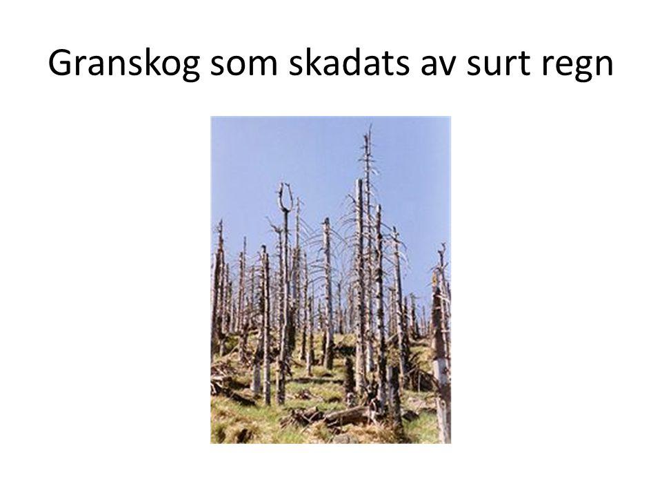 Granskog som skadats av surt regn