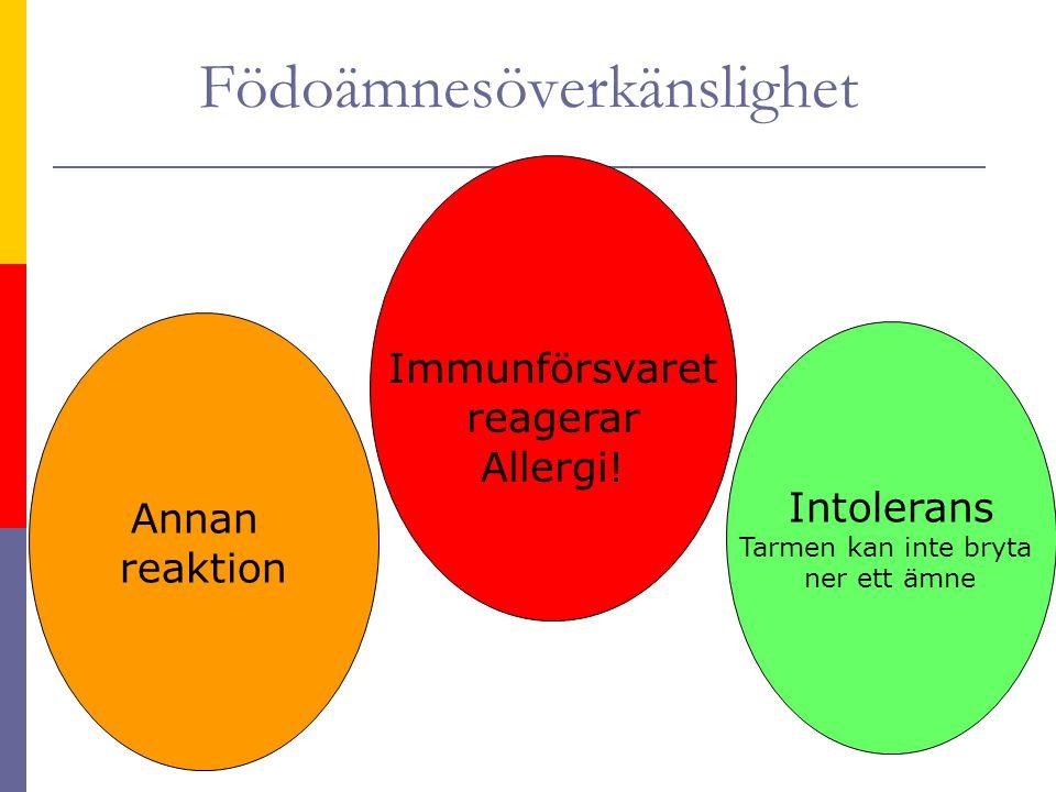 Födoämnesöverkänslighet Intolerans Tarmen kan inte bryta ner ett ämne Immunförsvaret reagerar Allergi.