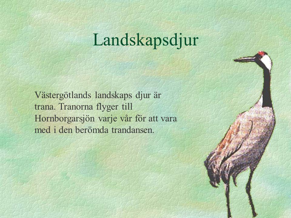 Landskapsdjur Västergötlands landskaps djur är trana. Tranorna flyger till Hornborgarsjön varje vår för att vara med i den berömda trandansen.