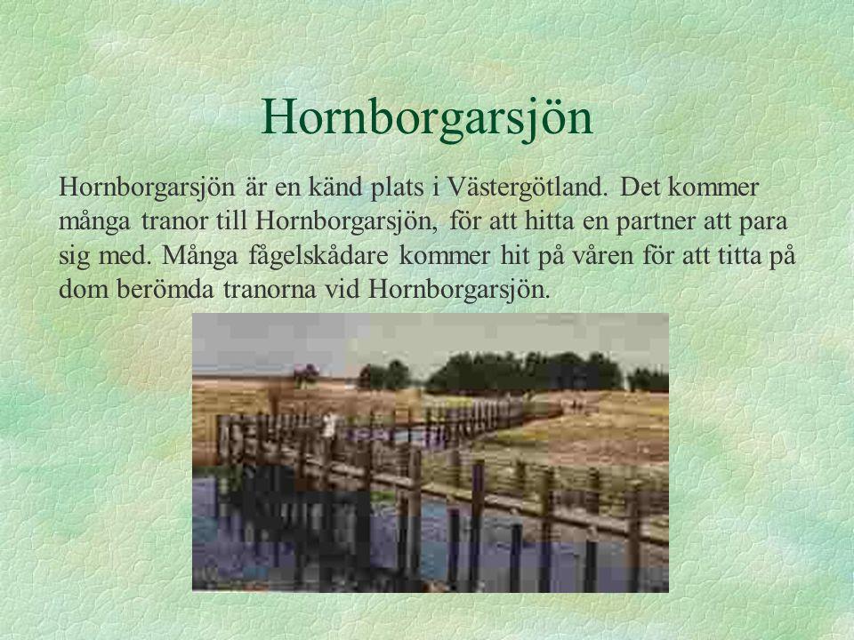 Hornborgarsjön Hornborgarsjön är en känd plats i Västergötland. Det kommer många tranor till Hornborgarsjön, för att hitta en partner att para sig med