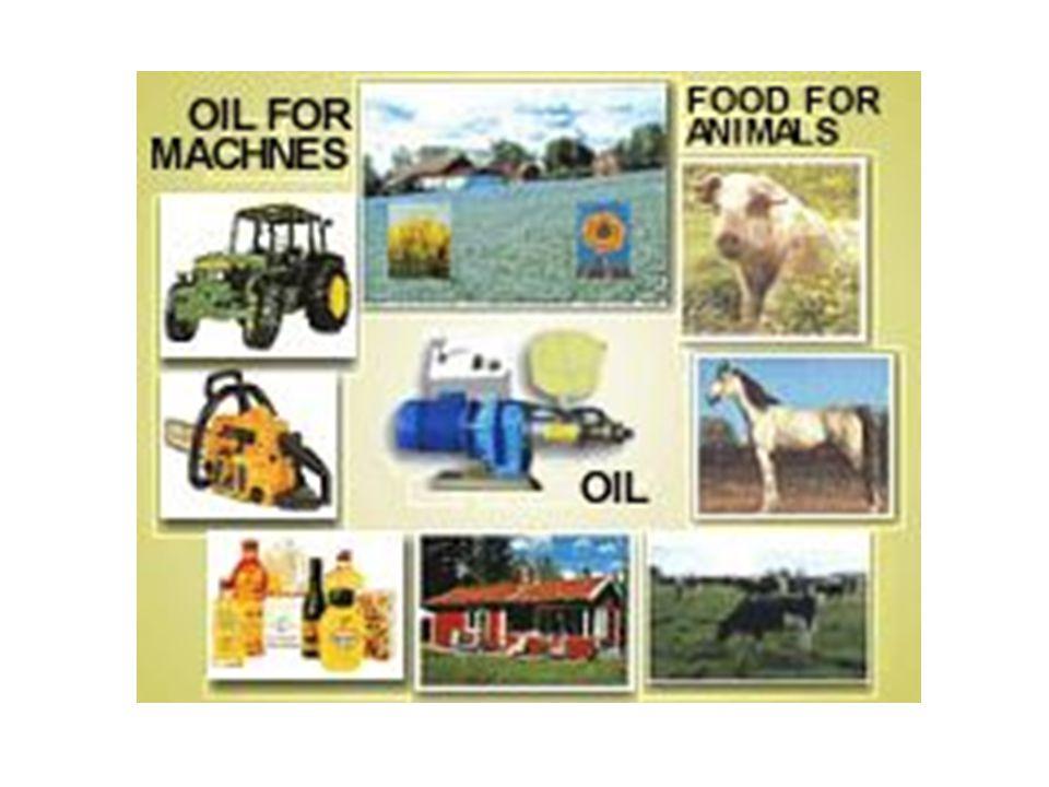 Raps, Lin, Solros mm Dieselolja. Matolja Foder till djur och bränsle