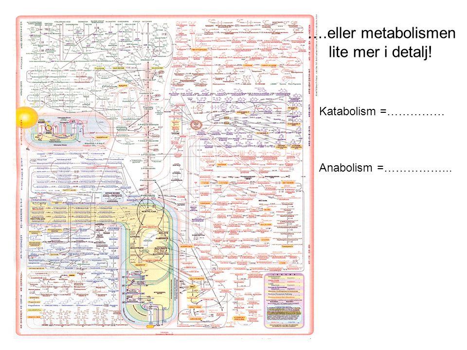 ….eller metabolismen lite mer i detalj! Katabolism =…………… Anabolism =……………...