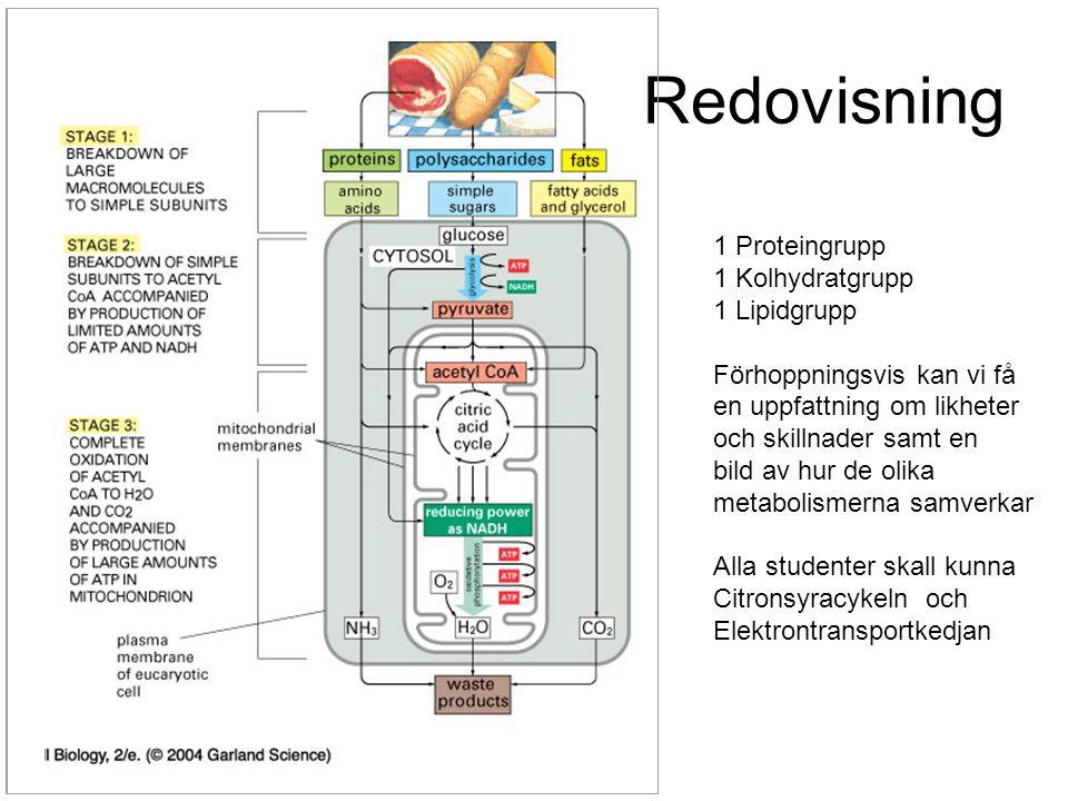 Redovisning 1 Proteingrupp 1 Kolhydratgrupp 1 Lipidgrupp Förhoppningsvis kan vi få en uppfattning om likheter och skillnader samt en bild av hur de ol
