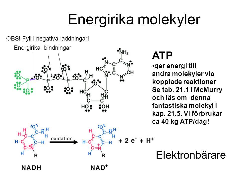 Energirika molekyler ATP •ger energi till andra molekyler via kopplade reaktioner Se tab. 21.1 i McMurry och läs om denna fantastiska molekyl i kap. 2