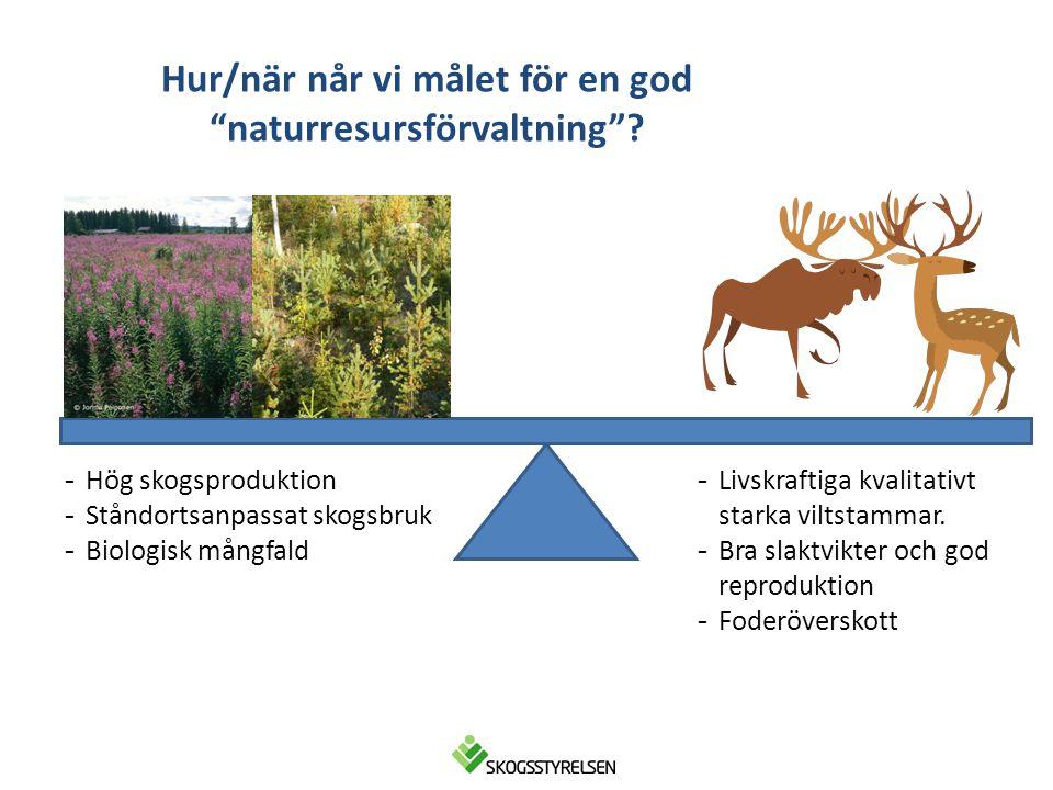 """Hur/när når vi målet för en god """"naturresursförvaltning""""? -Livskraftiga kvalitativt starka viltstammar. -Bra slaktvikter och god reproduktion -Foderöv"""