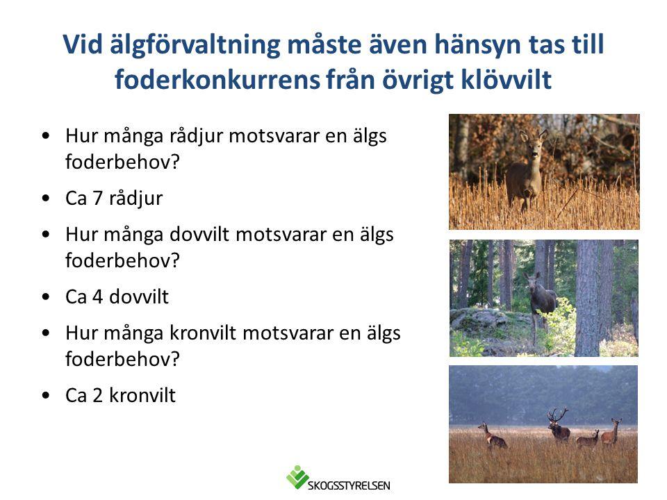 5 Svält, sjukdom, svag reproduktion, låga slaktvikter Älgkalv 0901 31 kg Älgkalv 0911 12 kg Skogskador Grandominerade skogar Biologisk utarmning För lite foder i förhållande till klövviltstammarna ger...