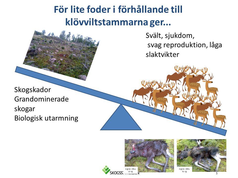 5 Svält, sjukdom, svag reproduktion, låga slaktvikter Älgkalv 0901 31 kg Älgkalv 0911 12 kg Skogskador Grandominerade skogar Biologisk utarmning För l