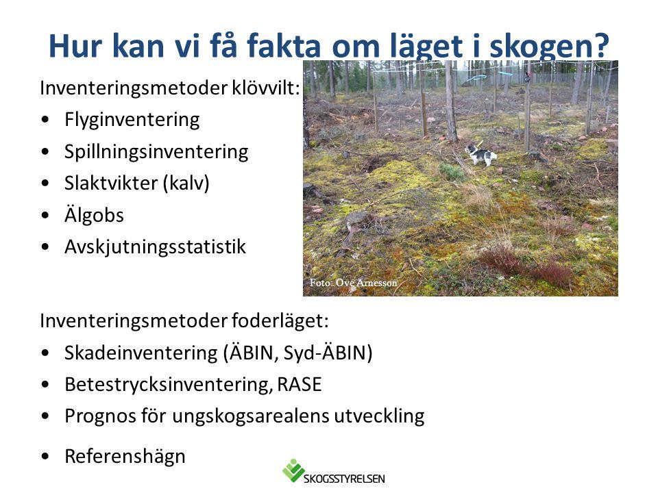 Hur kan vi få fakta om läget i skogen? Inventeringsmetoder klövvilt: •Flyginventering •Spillningsinventering •Slaktvikter (kalv) •Älgobs •Avskjutnings