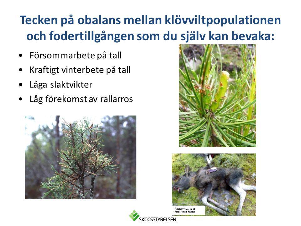 Ungskogsarealen är viktig •En grov tumregel är att ungskogen utnyttjas 5 ggr mer än övrig areal.