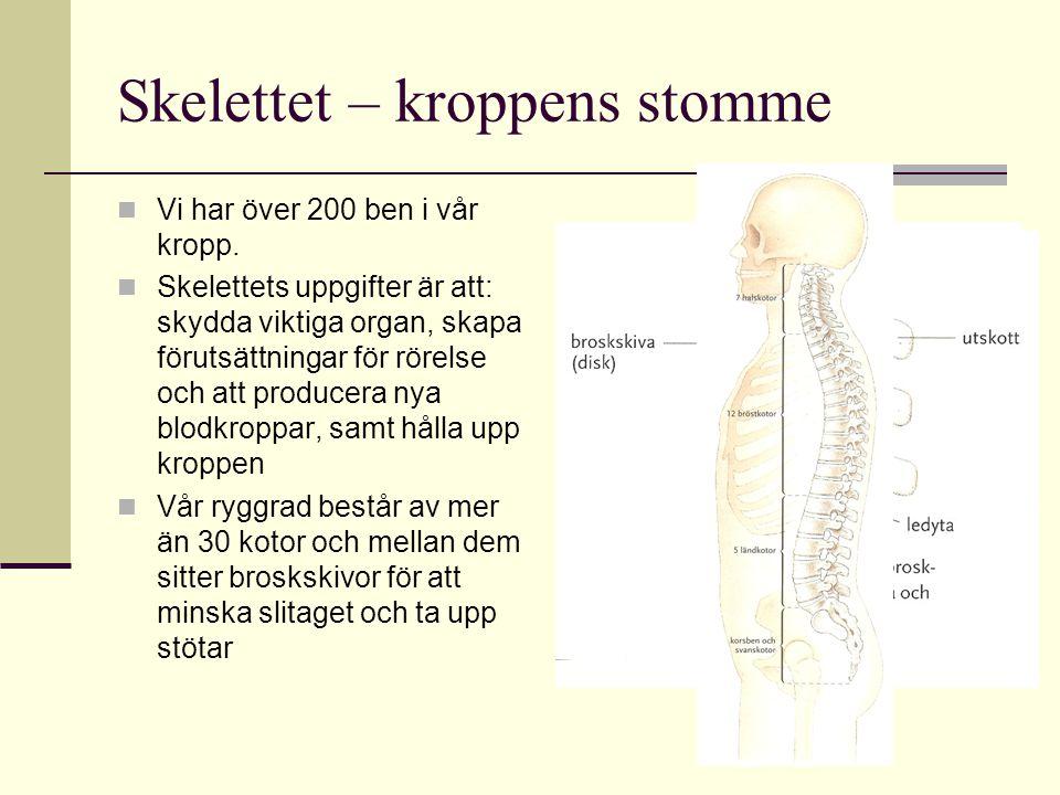Skelettet – kroppens stomme VVi har över 200 ben i vår kropp.
