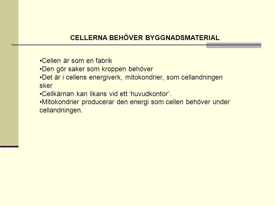 CELLERNA BEHÖVER BYGGNADSMATERIAL •Cellen är som en fabrik •Den gör saker som kroppen behöver •Det är i cellens energiverk, mitokondrier, som cellandningen sker •Cellkärnan kan likans vid ett 'huvudkontor'.
