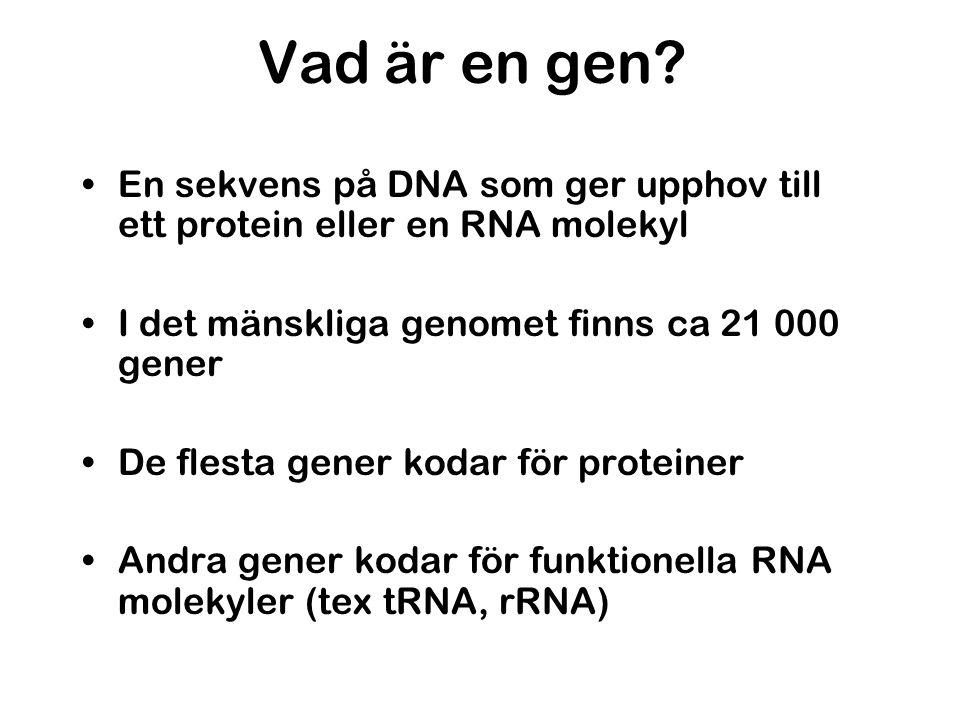 Vad är en gen? •En sekvens på DNA som ger upphov till ett protein eller en RNA molekyl •I det mänskliga genomet finns ca 21 000 gener •De flesta gener