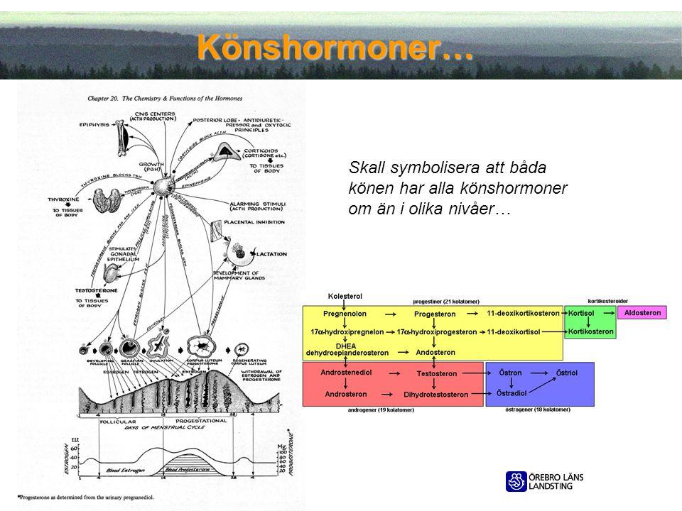 2012-05-11 Könshormoner… Skall symbolisera att båda könen har alla könshormoner om än i olika nivåer…