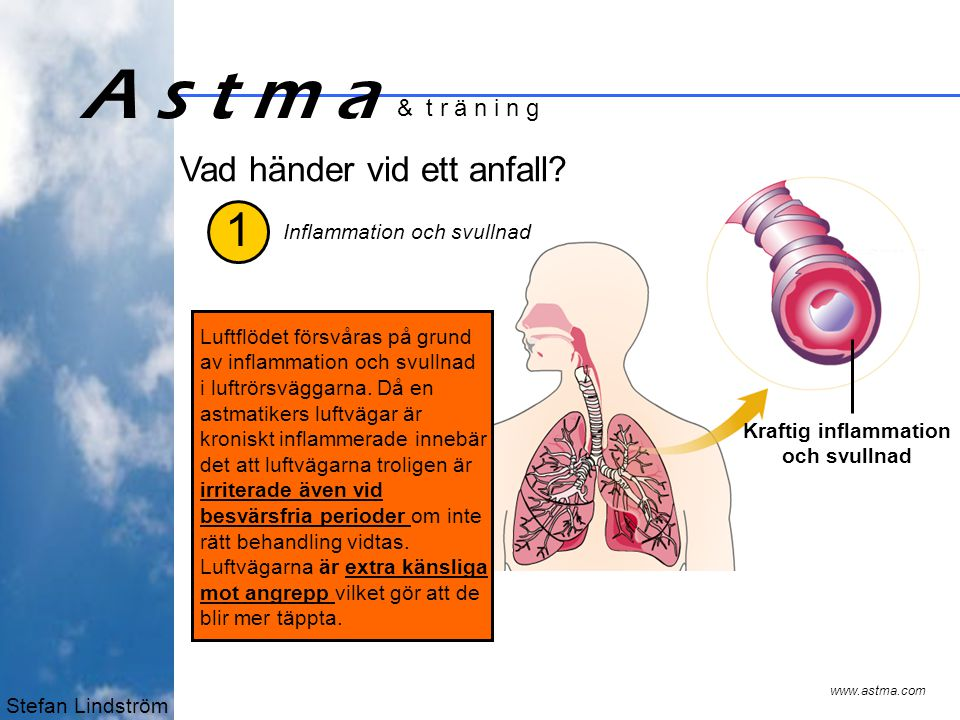 Stefan Lindström A s t m a & t r ä n i n g 2 www.astma.com Slem Kraftig inflammation och svullnad Överproduktion av slem vilket kan täppa till luftvägarna.