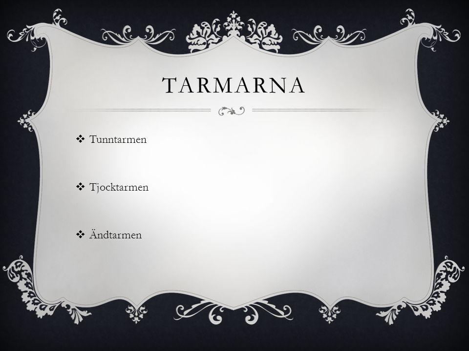 TARMARNA  Tunntarmen  Tjocktarmen  Ändtarmen