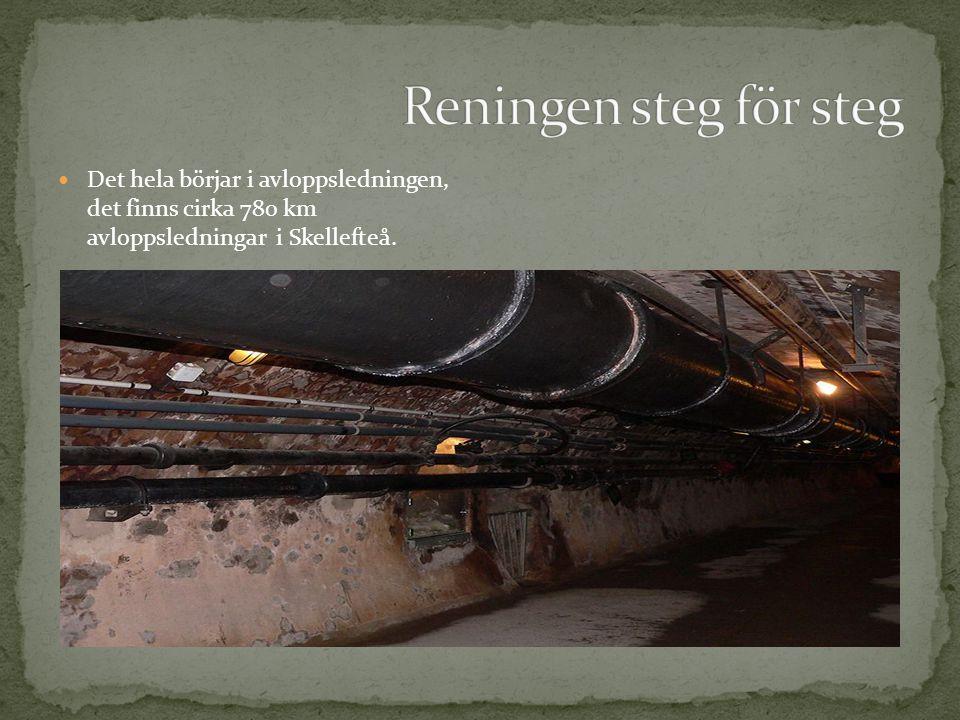  Det hela börjar i avloppsledningen, det finns cirka 780 km avloppsledningar i Skellefteå.