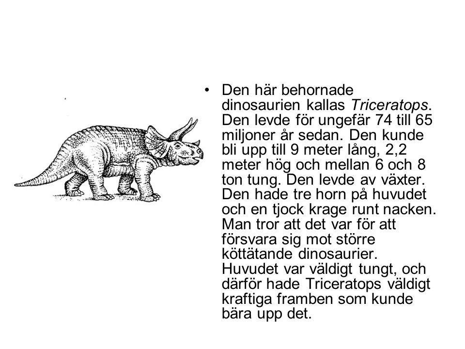 •Den här behornade dinosaurien kallas Triceratops. Den levde för ungefär 74 till 65 miljoner år sedan. Den kunde bli upp till 9 meter lång, 2,2 meter