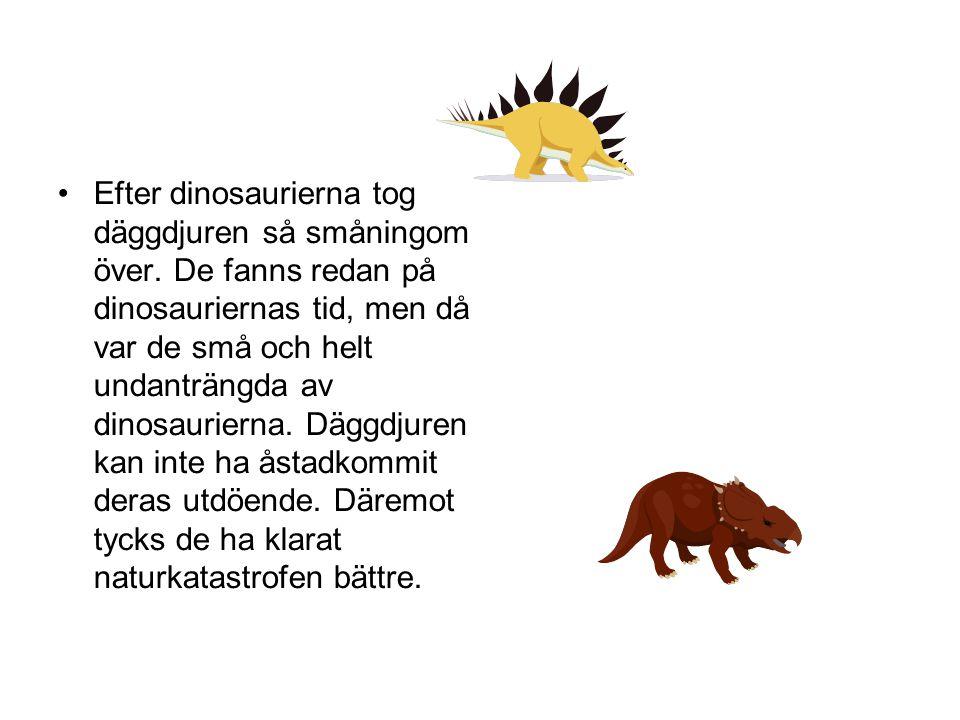 •Efter dinosaurierna tog däggdjuren så småningom över. De fanns redan på dinosauriernas tid, men då var de små och helt undanträngda av dinosaurierna.