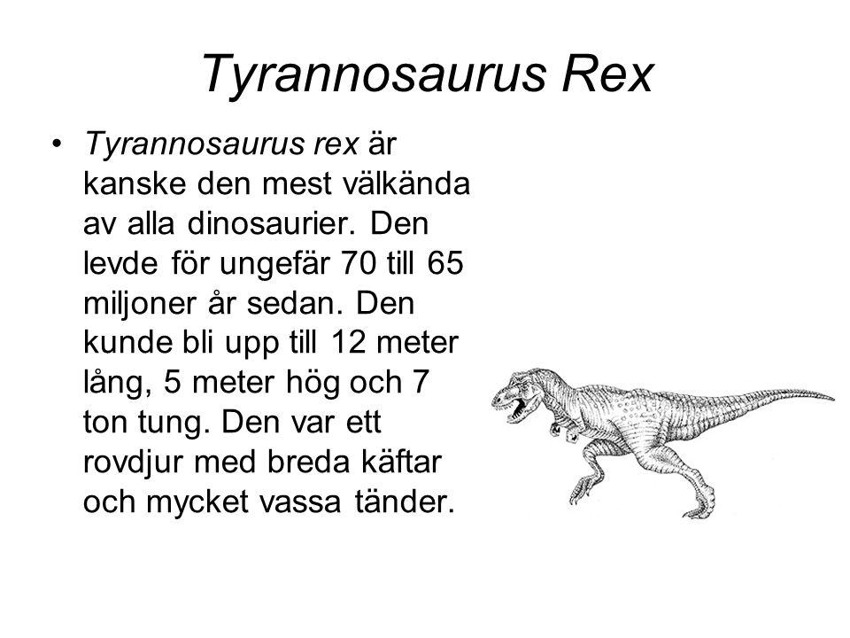 Tyrannosaurus Rex •Tyrannosaurus rex är kanske den mest välkända av alla dinosaurier. Den levde för ungefär 70 till 65 miljoner år sedan. Den kunde bl