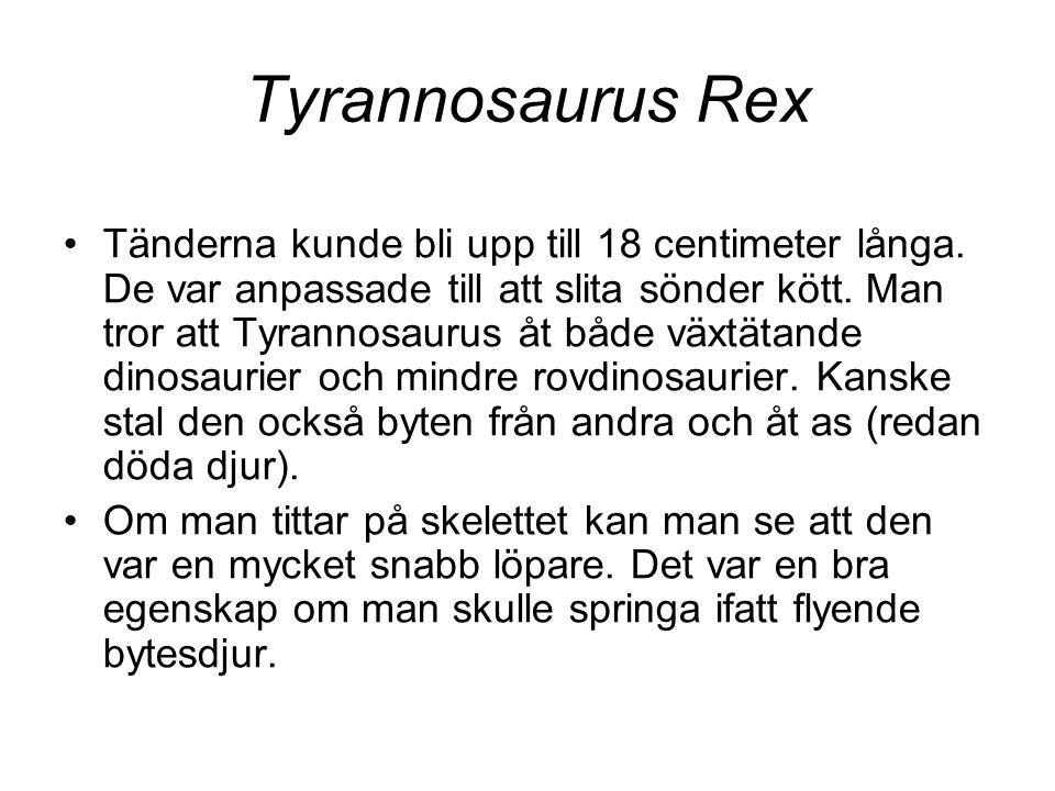 Tyrannosaurus Rex •Tänderna kunde bli upp till 18 centimeter långa. De var anpassade till att slita sönder kött. Man tror att Tyrannosaurus åt både vä