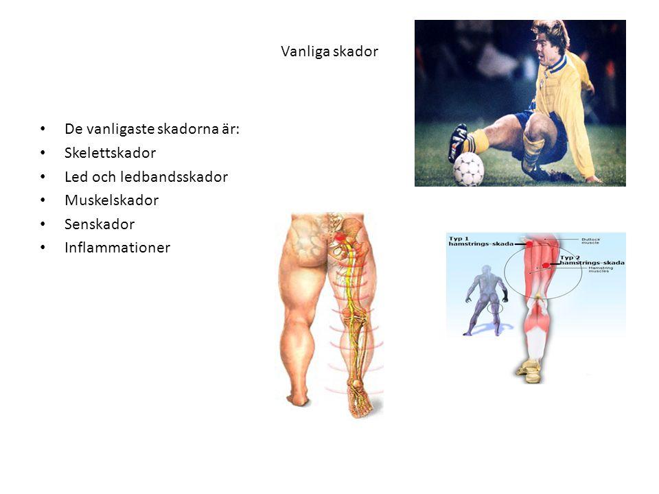 Vanliga skador • De vanligaste skadorna är: • Skelettskador • Led och ledbandsskador • Muskelskador • Senskador • Inflammationer