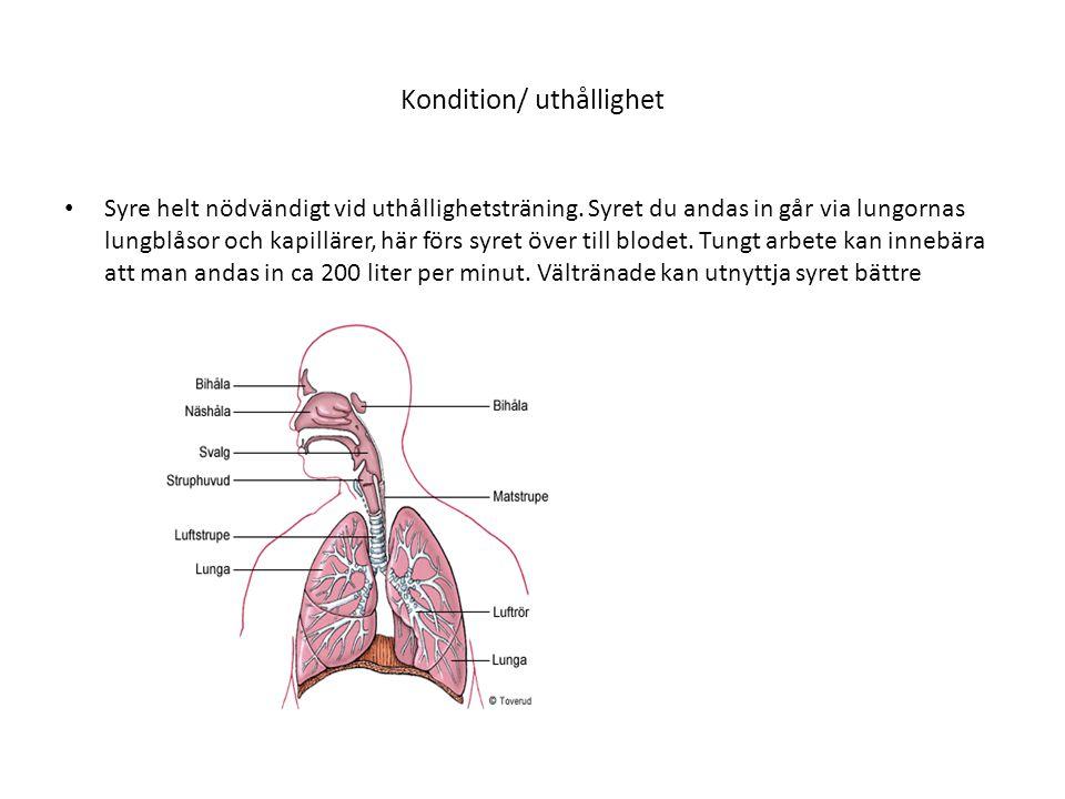 Syrets väg från blod till muskel • Syret binds vid hemoglobinet och förs till ex muskelcellerna.