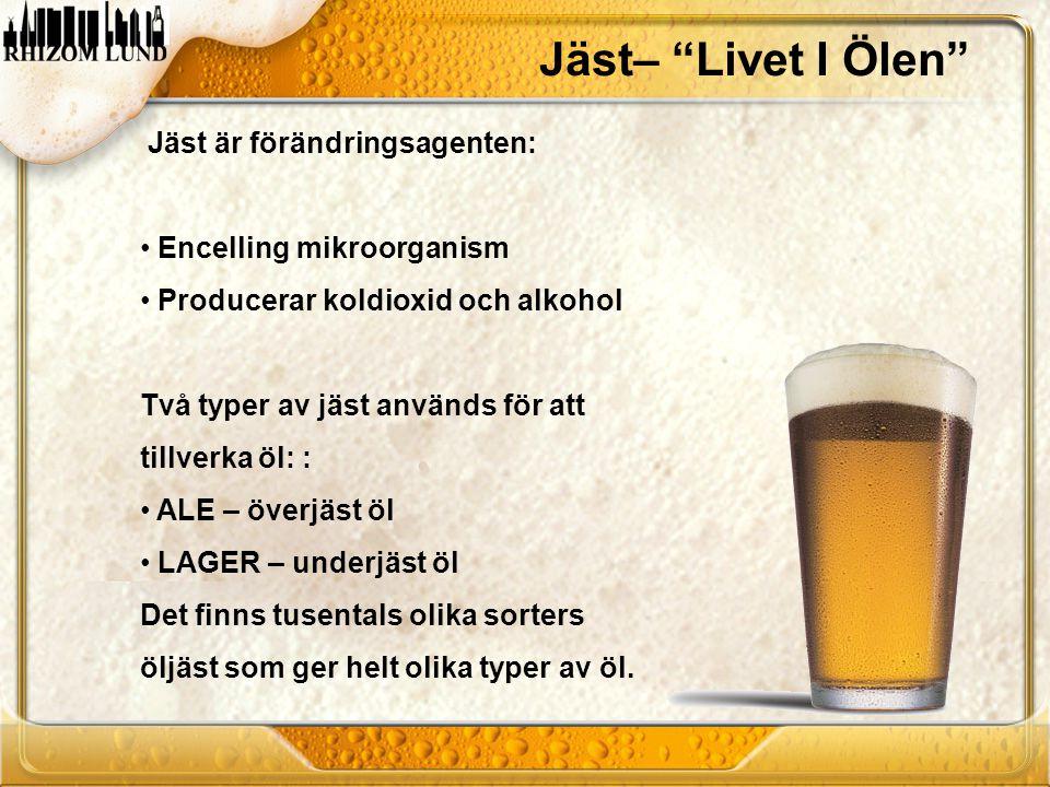 """Jäst– """"Livet I Ölen"""" Jäst är förändringsagenten: • Encelling mikroorganism • Producerar koldioxid och alkohol Två typer av jäst används för att tillve"""