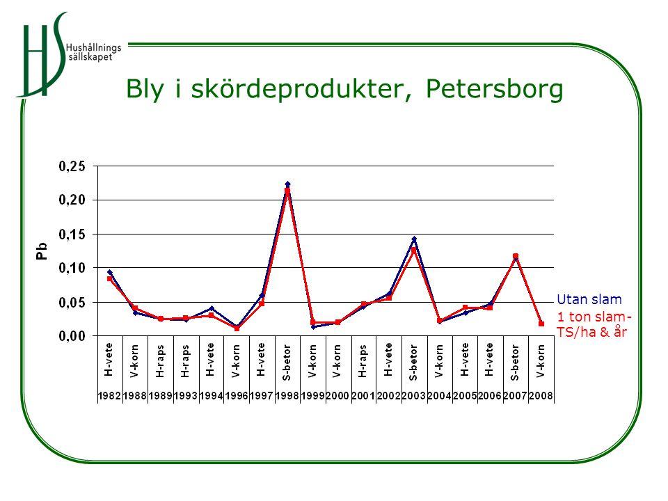 Bly i skördeprodukter, Petersborg Utan slam 1 ton slam- TS/ha & år