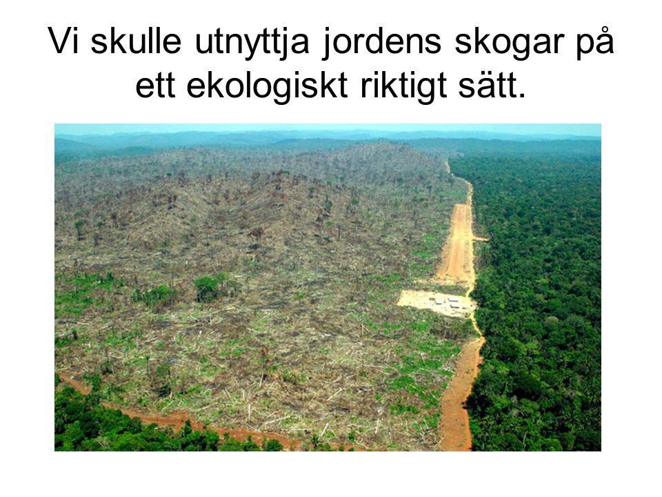 Vi skulle utnyttja jordens skogar på ett ekologiskt riktigt sätt.